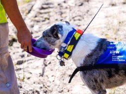 pies-ratujący-koale-3-864×575