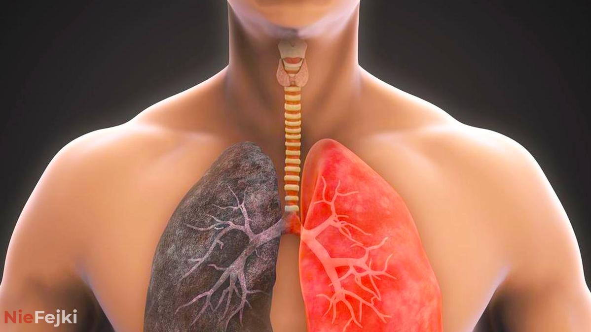 W kilka dni możesz oczyścić swoje płuca i…
