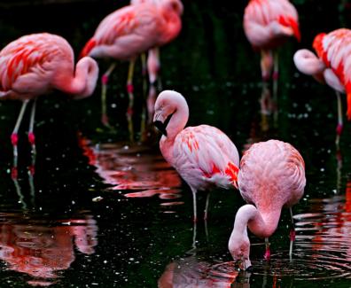 niefejki-flamingi