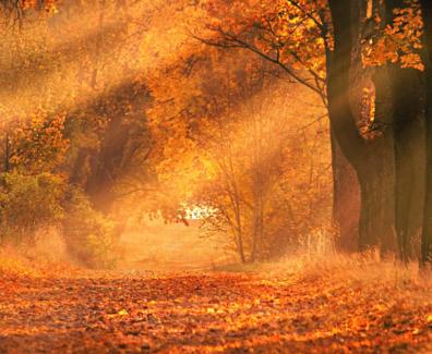 niefejki-jesien