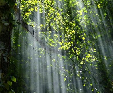 Gratis obraz na Pixabay – Las, Drzewa, Światło Słoneczne